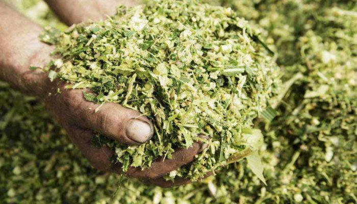SILOSOLVE FC ECO, silirni dodatek za izboljšano fermentacijo in aerobno stabilnost, 200 g