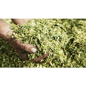 SILOSOLVE FC ECO, za izboljšano fermentacijo in aerobno stabilnost, 200 g