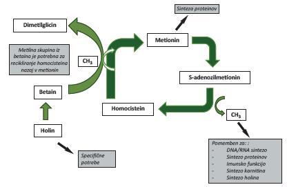 metilacijski cikel